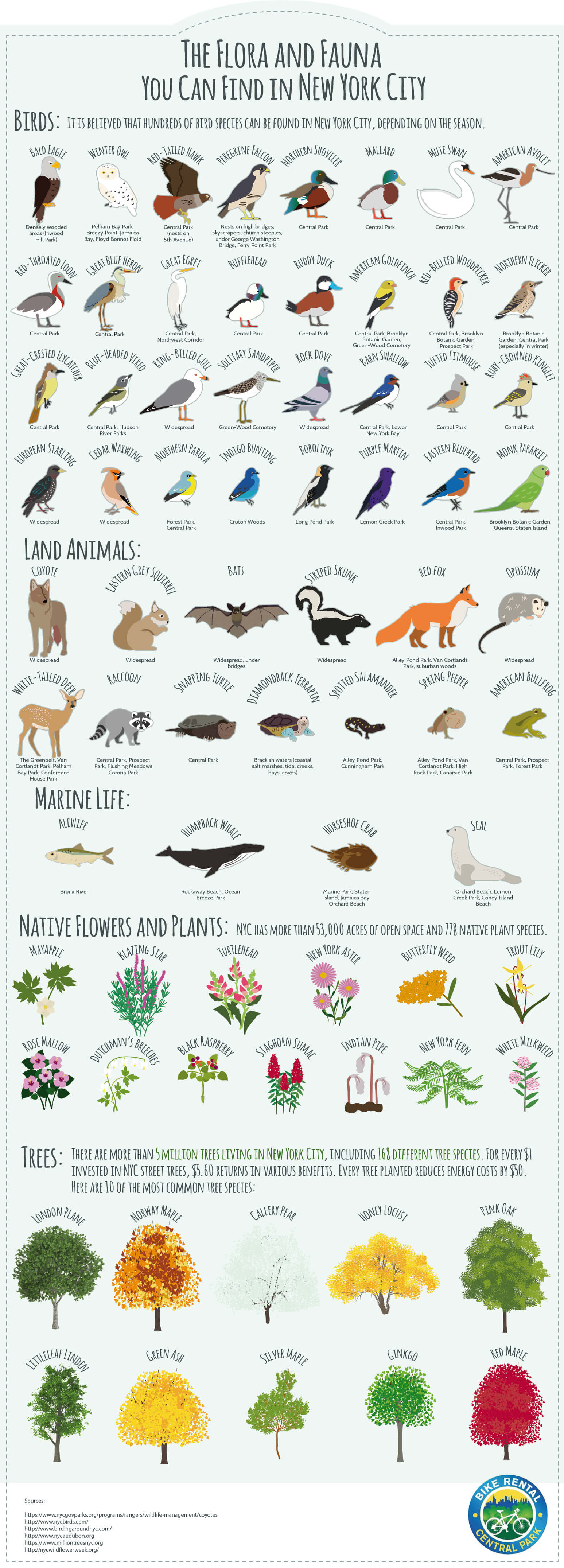 The Flora and Fauna You Can Found in NYC - https://centralparkbikerental.nyc - Infographic